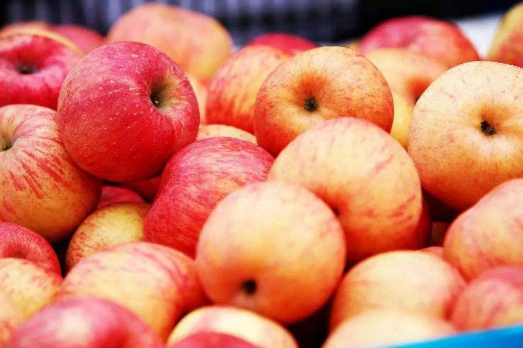 吸烟者的好消息!吃苹果、西红柿可以保持肺部健康