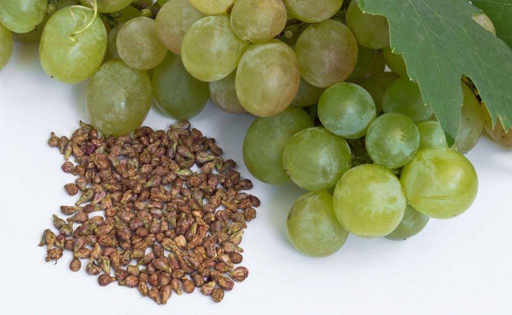 葡萄籽提取物:对人们突出的10大健康益处