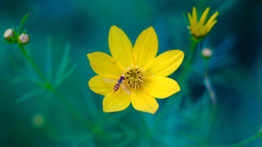 蜂花粉的作用与功效:蜂花粉的11大健康益处