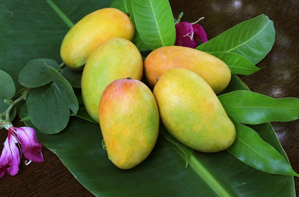 芒果越红越甜吗?看果皮、果蒂3个关键挑出最香甜芒果