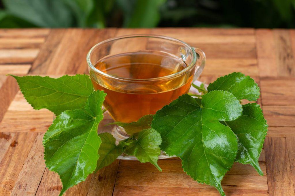桑叶茶:4个显著的健康益处