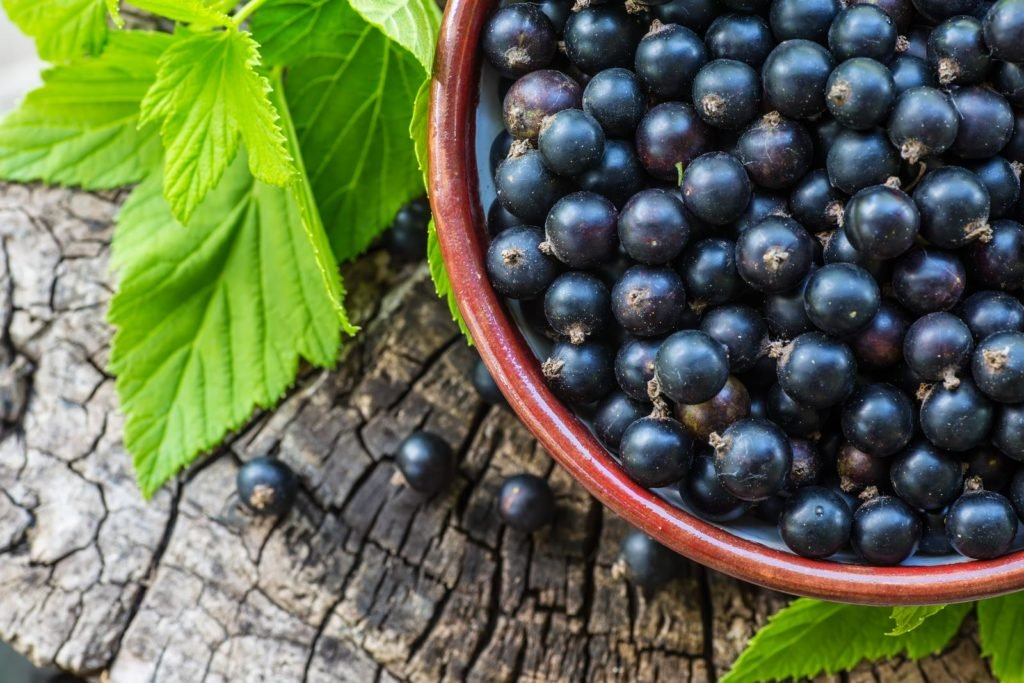 黑加仑:富含抗氧化剂的浆果,可以增强免疫力
